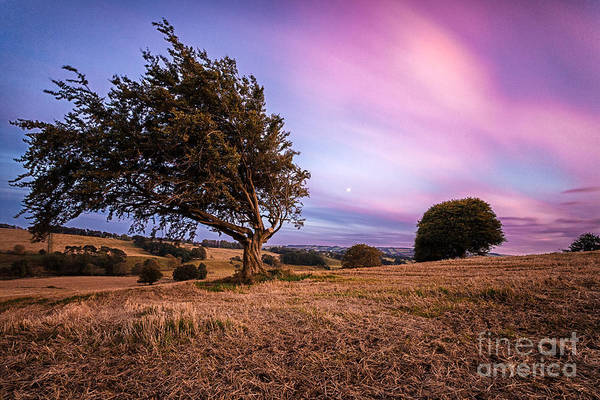 Big Sky Art Print featuring the photograph Tree At Sunset by John Farnan