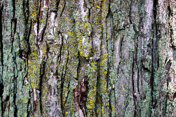 Tree Bark Detail Study Moss Nature Branches Leaves Green Art Print featuring the mixed media Tree Bark Detail Study by Design Turnpike