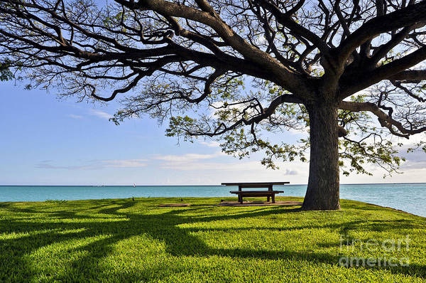Ocean Art Print featuring the photograph Tree Canopy by Gina Savage
