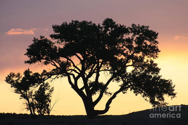 Tree Art Print featuring the photograph Tree Of Life by Brandi Maher