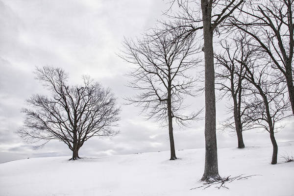 Kentucky Art Print featuring the photograph Trees And Snow by Wendell Thompson