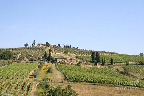 Vineyard Art Print featuring the photograph Tuscany Vineyard by Christiane Schulze Art And Photography