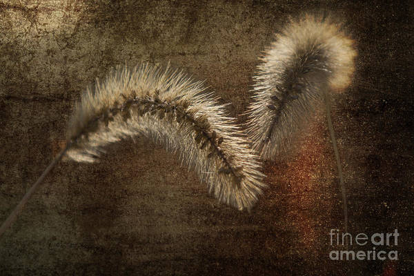 Grass Art Print featuring the photograph Two Grass Flowers by Heiko Koehrer-Wagner