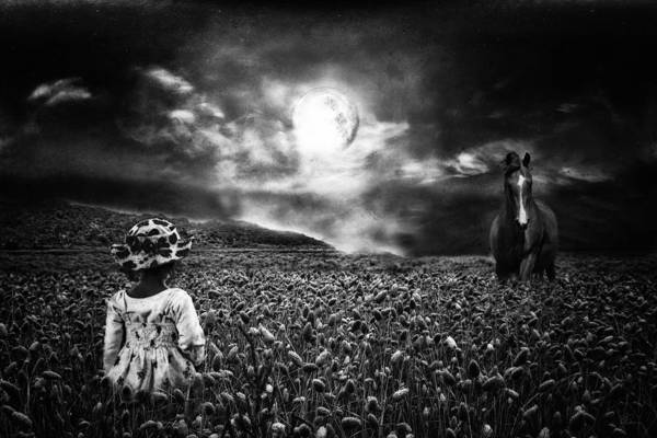 Horse Art Print featuring the photograph Under The Moonlight by Sabine Peters