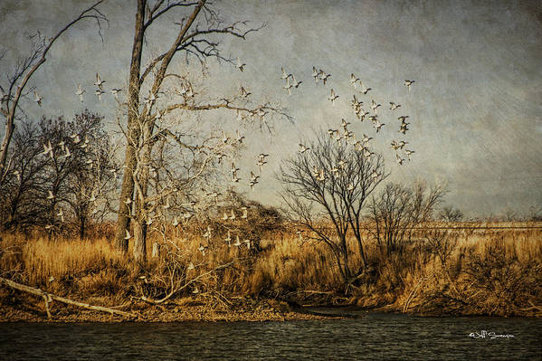 Ducks Art Print featuring the photograph Up Up And Away by Jeff Swanson