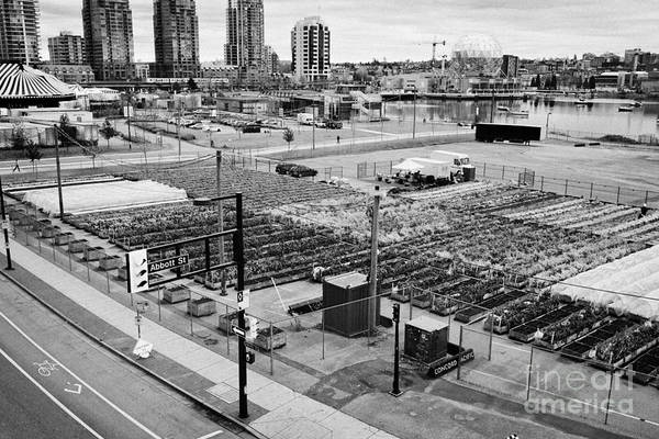 Concord Print featuring the photograph urban farm on unused lot at concord pacific place at false creek Vancouver BC Canada by Joe Fox