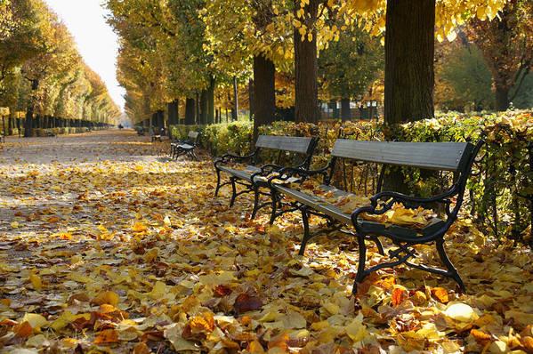 View Of Park Benches In Autumn Park Of Schoenbrunn Castle Vienna Austria Art Print