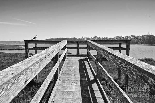 Elkhorn Slough Art Print featuring the photograph View Of The Elkhorn Slough From A Platform. by Jamie Pham
