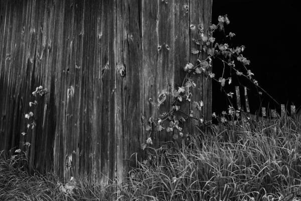 B&w Art Print featuring the photograph Vines On The Shed by Jim Vance
