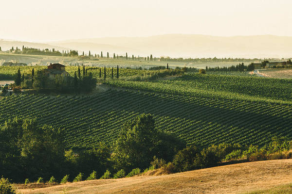 Fine Art Print featuring the photograph Vineyard From Above by Clint Brewer