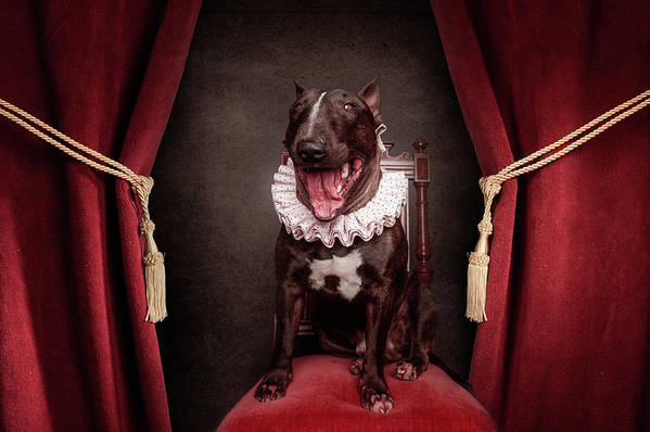 Dogs Art Print featuring the photograph Welcome To The Show by Heike Willers
