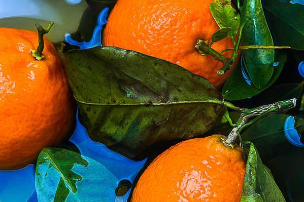 Mandarin Art Print featuring the photograph Wet Tangerines by Alexander Senin