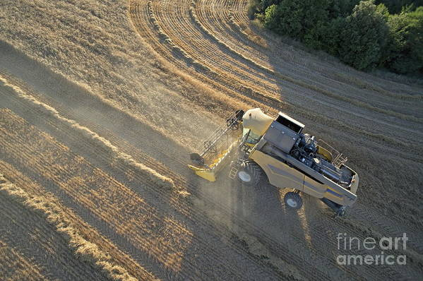 Abundance Art Print featuring the photograph Wheat Harvest In Provence by Sami Sarkis
