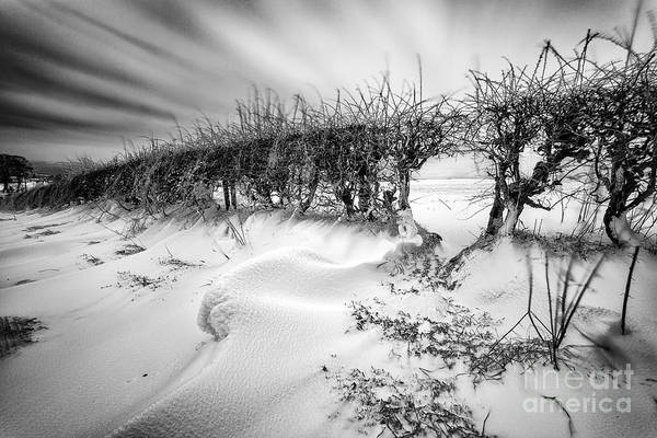 Black And White. Mono. Monochromatic Art Print featuring the photograph When The Wind Blows by John Farnan