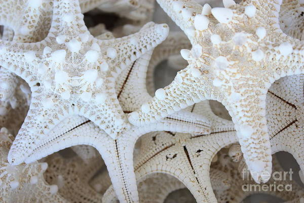 White Art Print featuring the photograph White Starfish by Carol Groenen