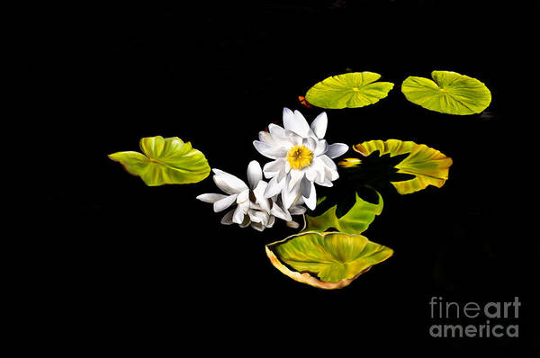 Lily Art Print featuring the digital art White Water Lilies by Frances Hattier