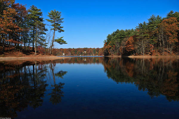 Pond Print featuring the photograph Whites Pond by Corey Sheehan