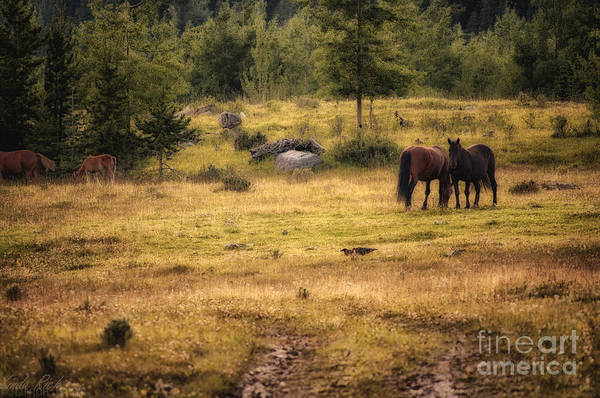Wild Art Print featuring the photograph Wild Horse Band In Kananaskis Country by Linda Rich