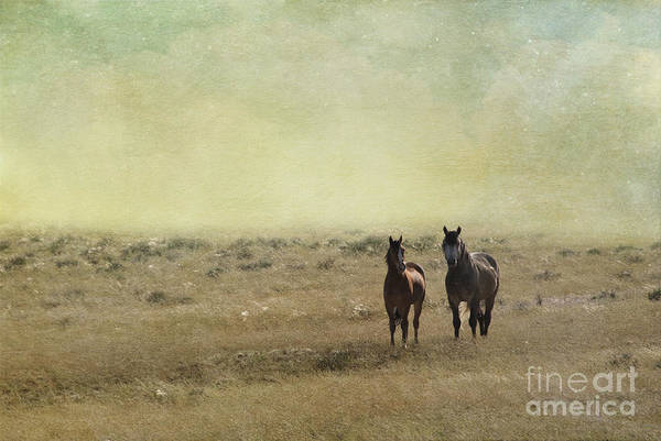 America Art Print featuring the photograph Wild Pair by Juli Scalzi