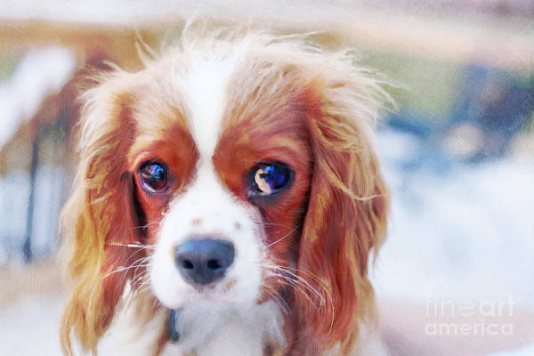Cavalier Art Print featuring the photograph Will You Play With Me by Kay Pickens