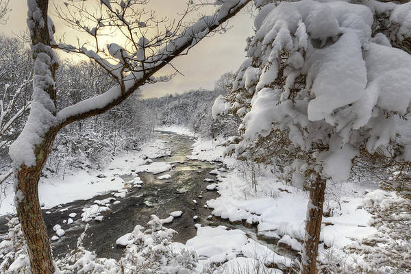 Snow Covered Treee Art Print featuring the photograph Winter Morning by Bill Wakeley