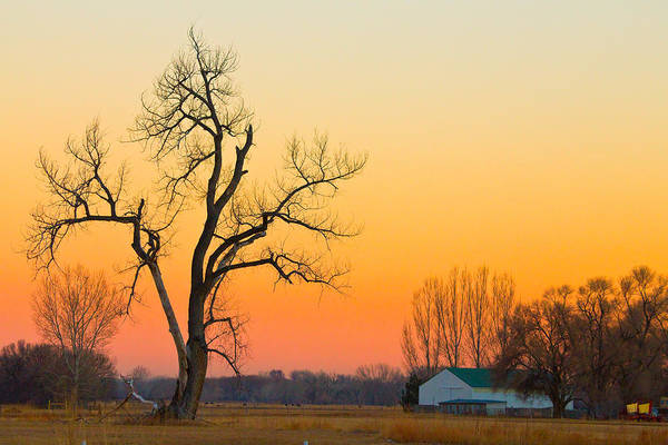 Tree Art Print featuring the photograph Winter Season Country Sunset by James BO Insogna