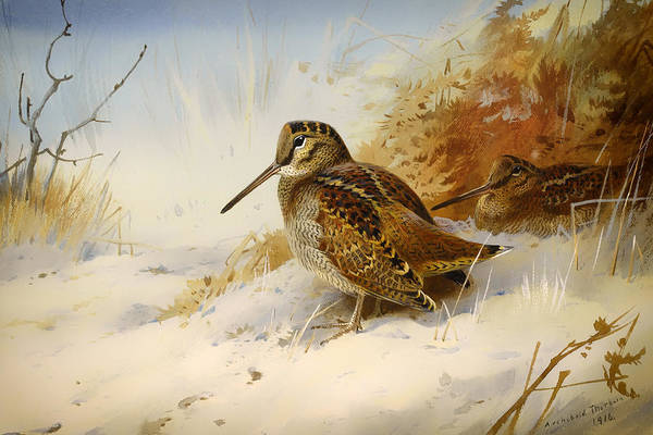 Seasons Art Print featuring the painting Winter Woodcock by Mountain Dreams