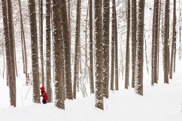 north Woods Snow snowy Woods winter Woods duluth lake Superior Winter fresh Snow greeting Cards amity Woods lester Park child In Landscape childhood Wonder winter Wonderland Art Print featuring the photograph Winter Frolic by Mary Amerman