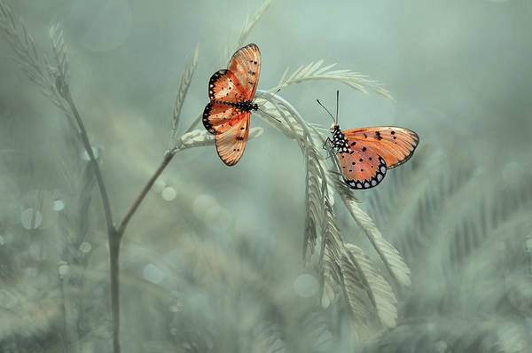 Butterfly Art Print featuring the photograph With You by Edy Pamungkas