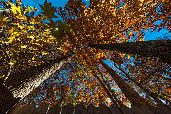 Autumn Art Print featuring the photograph Yonder Sky by Gene Hilton
