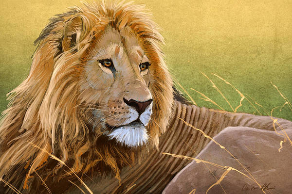 Lion Art Print featuring the digital art Young Lion by Aaron Blaise