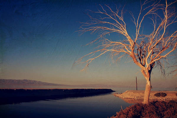 Salton Sea Art Print featuring the photograph Your One And Only by Laurie Search