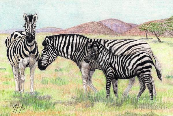 Zebra Art Print featuring the drawing Zebra Trio by Audrey Van Tassell