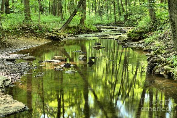 Hells Hollow Art Print featuring the photograph Zen In The Forest by Adam Jewell