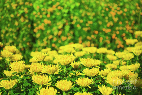 Flowers Art Print featuring the photograph Flower Market by MotHaiBaPhoto Prints