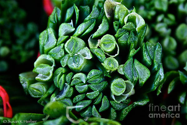 Food Art Print featuring the photograph Fresh Chives by Susan Herber