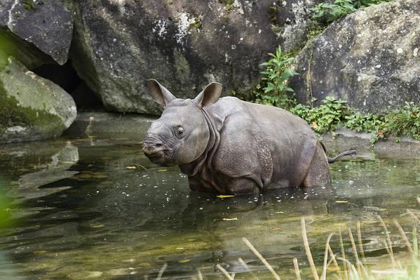 Mp Art Print featuring the photograph Indian Rhinoceros Rhinoceros Unicornis by Konrad Wothe