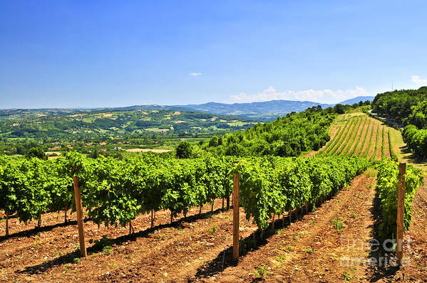 Vineyard Art Print featuring the photograph Landscape With Vineyard by Elena Elisseeva