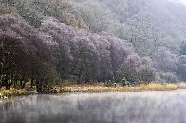 Cold Art Print featuring the photograph Lower Lake, Glendalough, County by Peter McCabe