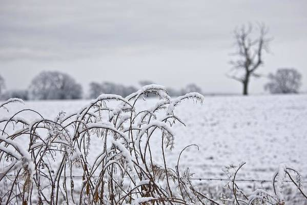 Bare Trees Print featuring the photograph Snow Covered Trees And Field by John Short