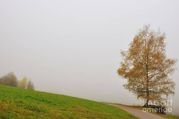 Tree Art Print featuring the photograph Tree In The Fog by Mats Silvan