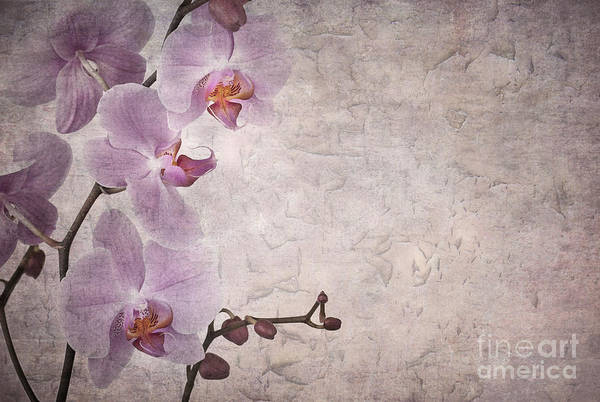 Aged Art Print featuring the photograph Vintage Orchids by Jane Rix