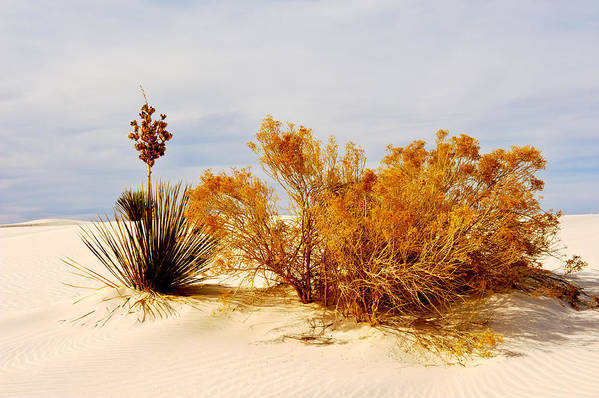 Landscape Art Print featuring the photograph White Sands by Larry Gohl