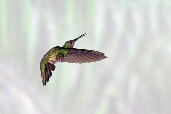 Horizontal Art Print featuring the photograph Hummingbird by David Tipling