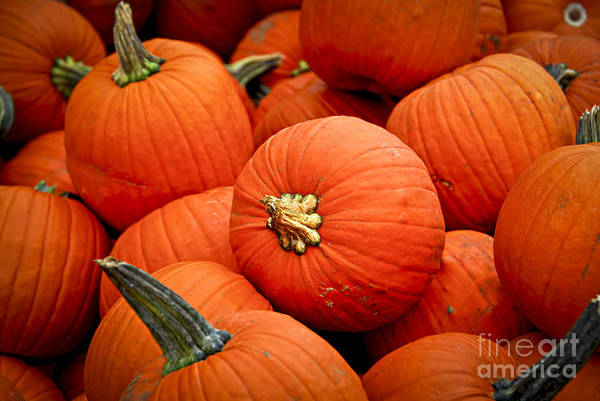 Fall Art Print featuring the photograph Pumpkins by Elena Elisseeva