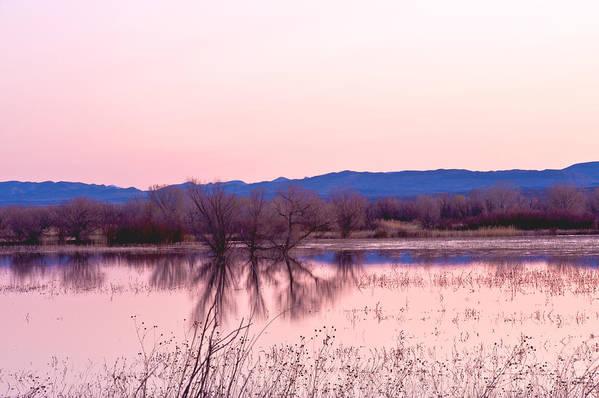 Landscape Art Print featuring the photograph Bosque Del Apache by Larry Gohl