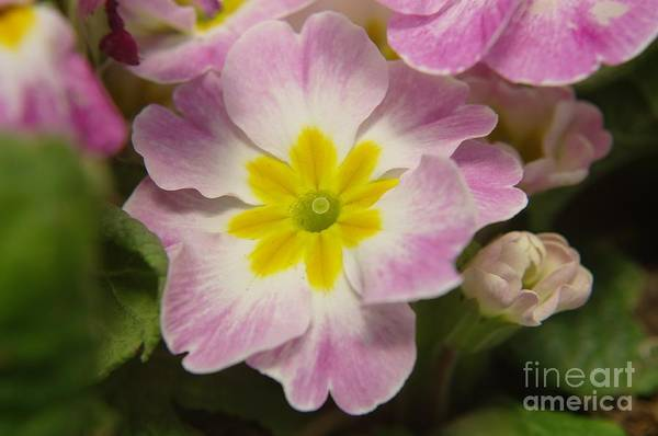 Flowers Art Print featuring the photograph A Shy Flower by Jeff Swan