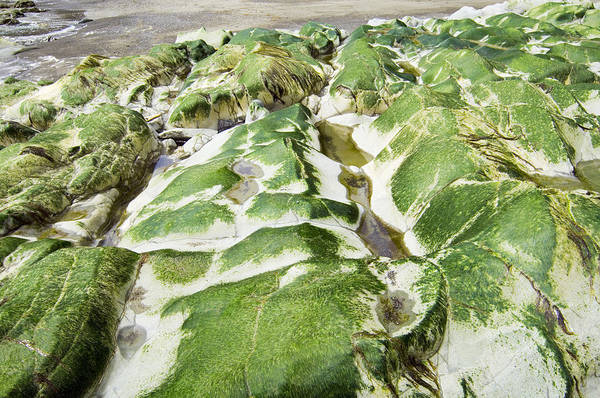 Algae Art Print featuring the photograph Algae Covered Rocks by Georgette Douwma