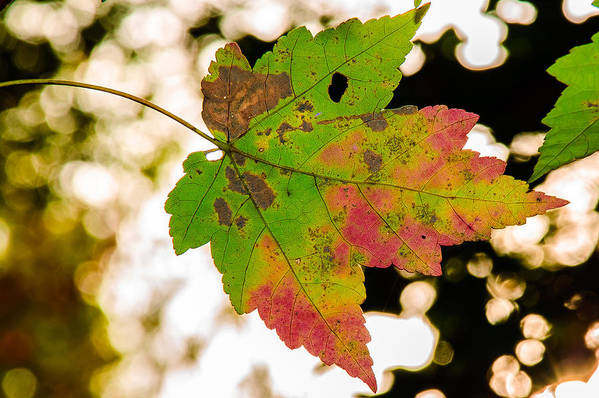 Leaves Art Print featuring the photograph Amid The Bokeh by Gene Hilton