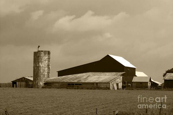Photograph Art Print featuring the photograph Amish Farm by Brenda Carpenter